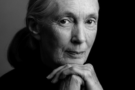 Jane Goodall poster image revised